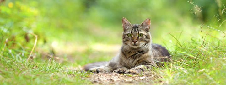 catFeature