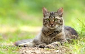rozcestník - kočka